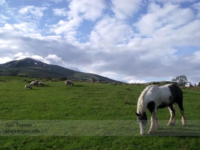 Zvířata Tombreck farmy, v pozadí hora Ben Lawer. Foto: Jan Toman