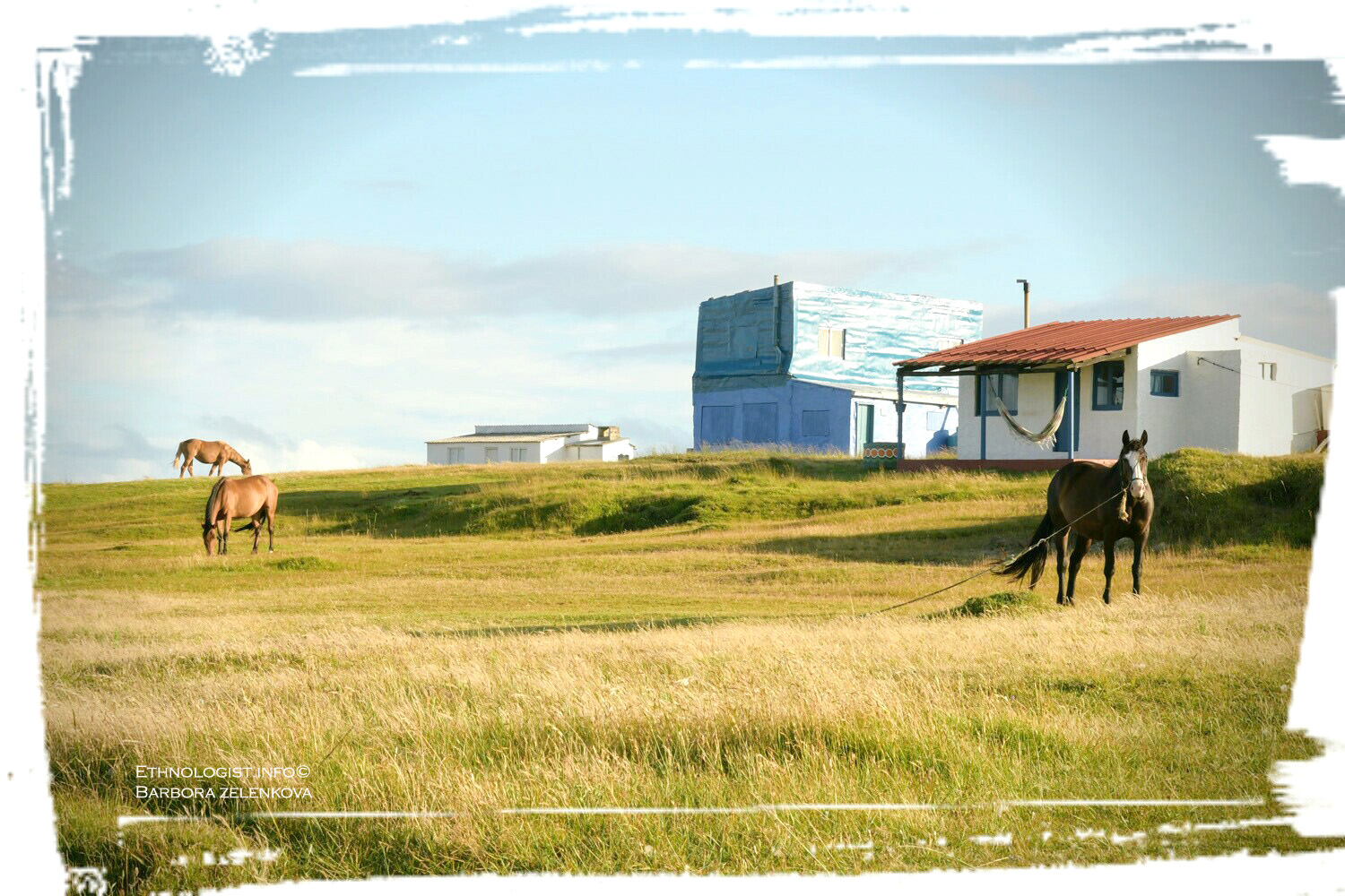 Grazing horses in sunny pasture in Cabo Polonio. Photo: Barbora Zelenková, December, 2016.