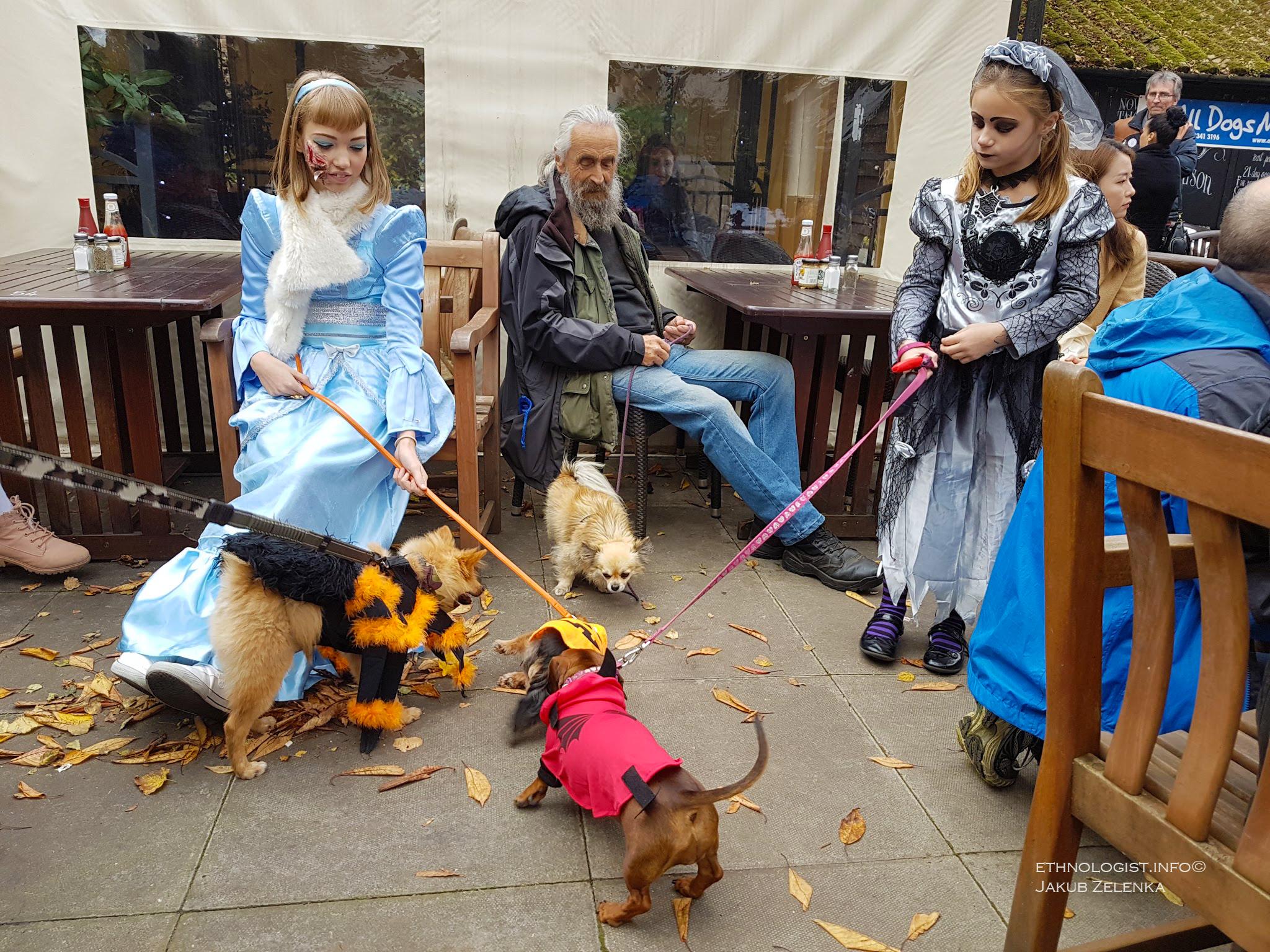 Svátek Halloween slaví i mnohé dobročinné organizace. Zde je zachycena charitativní akce spolku All Dogs Matter k níž tradičně patří i skupinový halloweenský průvod se psy. Foto: Jakub Zelenka, Lodnýn, 2017.