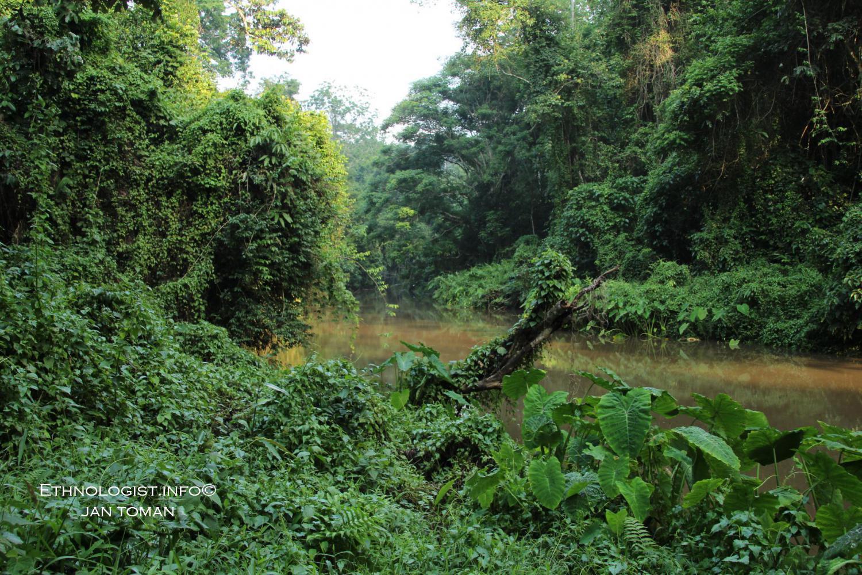 Hustý tropický les v Národním parku Khao Yai. Foto: Jan Toman, Thajsko, 2017.