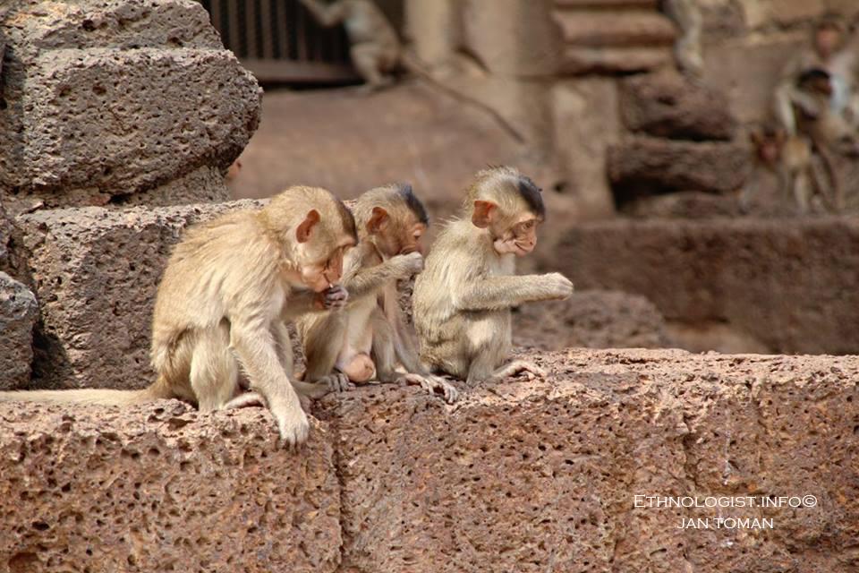 """Thajské historické """"opičí město"""" Lopburi. Foto: Jan Toman, Thajsko, 2017."""