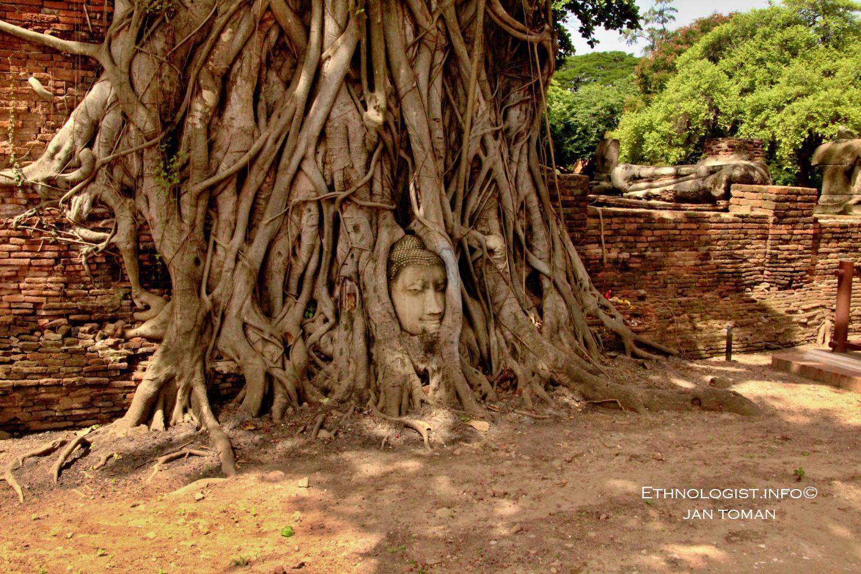 Hlava Buddhy v kořenech stromů v historickém hlavním městě Thajska Ayutthaya. Foto: Jan Toman, Thajsko, 2017.